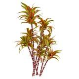 Decorative palm plant Royalty Free Stock Photos