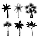 Decorative palm trees collection Royalty Free Stock Image