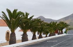 Decorative palm trees on the island Fuerteventura Royalty Free Stock Image