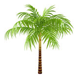Decorative palm Royalty Free Stock Image