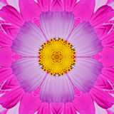 Decorative panel of asters Stock Photos