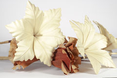 Decorative paper flowers, on white background. Several decorative paper flowers of different forms and colors (brown and cream), isolated on white background Stock Photos