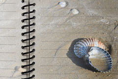 Decorative paper with seashells Royalty Free Stock Photo