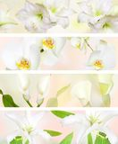 Decorative Pastel color flower banner Stock Photo