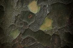 Decorative pattern on the bark Royalty Free Stock Images