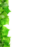 Decorative pattern from green leaves Stock Photography