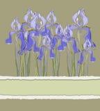 Decorative pattern invitation with Iris flowers,  illustration Stock Photography