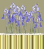 Decorative pattern invitation with Iris flowers, Stock Photos