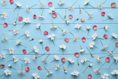 Decorative pattern of white cherry flowers and red petals. Pattern of white cherry blossom flowers and red rose petals. Floral decoration on a blue wooden royalty free stock photos