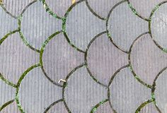 Decorative paving tile. background, texture, pattern. Royalty Free Stock Photo