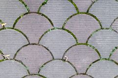 Decorative paving tile. background, texture, pattern. Stock Image