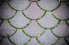 Decorative paving tile. background, texture, pattern. Royalty Free Stock Image