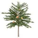 Decorative peach tree Royalty Free Stock Photography