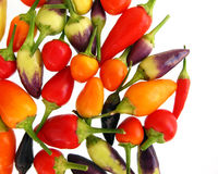 Decorative peppers Stock Image