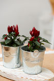 Decorative peppers for bouquets and arrangements in a small iron bucket. Royalty Free Stock Photos