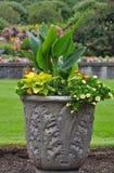 Decorative Petunia Planter Stock Image