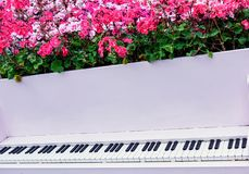Decorative piano with flowers growing out of it royalty free stock photography