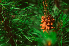 Decorative pine bush on a background of leaves Royalty Free Stock Photos