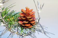 Decorative pine cone. Pine cone and decoration on a branch of christmas tree royalty free stock photos