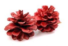 Decorative pine cones Royalty Free Stock Photo