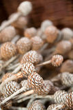 Decorative pine corns Royalty Free Stock Photos