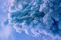 Decorative pine and snow Royalty Free Stock Images
