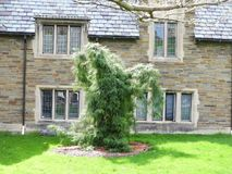 Decorative pine tree in front of stone hall on Cornell campus stock images