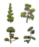 Decorative pine tree Royalty Free Stock Photo