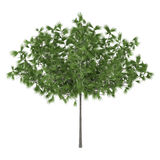 Decorative pine tree Stock Images