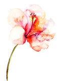Decorative pink flower. Watercolor illustration Royalty Free Stock Image