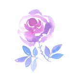 Decorative pink rose hand drawn watercolor illustration. Elegant vivid floral design element for card, header, cover, flayer Stock Photos