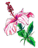 Decorative pink tropical hibiscus flower Stock Image