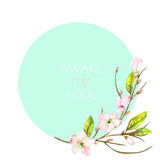 A decorative place (banner) for a text with an ornament of an apple tree branch with the tender pink blooming flowers, painted in Royalty Free Stock Image