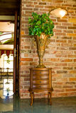 Decorative plant and furniture Stock Images
