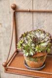 Decorative plant in rusty pot Stock Photos