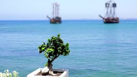 Decorative plant. Sailing ships at sea on a background of a decorative plant tree, sailboat, sailing vessel stock video
