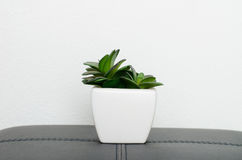Decorative plant Royalty Free Stock Photography