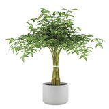 Decorative plant tree in the ball pot Stock Photography
