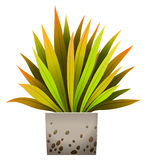 A decorative plant. On a white background royalty free illustration