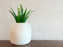 Decorative plant in white vase Stock Photo