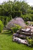 Decorative plants Royalty Free Stock Image