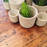 Decorative plants in concrete pots on old wooden table Stock Images