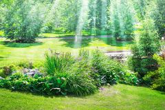 Decorative plants flowerbeds among the lawn in the park. Sun ray. S Stock Image