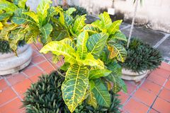 Decorative plants in front of church in Santa Clara, Cuba stock image