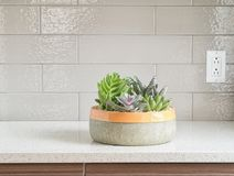 Decorative plants on granite counter-top Stock Photo