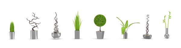 Decorative plants isolated on white. vector illustration