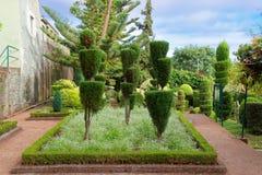 Decorative plants in Jardim Botanico Garden on Portuguese island of Madeira. Monte Funchal, Portugal - September 18, 2018: Decorative plants in Jardim Botanico royalty free stock image