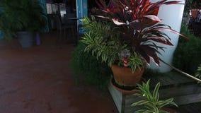 Decorative plants near the cafe,and the Cristmas tree,Saint Thomas, U.S. Virgin Islands stock video