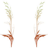 Decorative plants (vector) Stock Photos