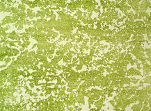 Decorative plaster and white-green Royalty Free Stock Photo